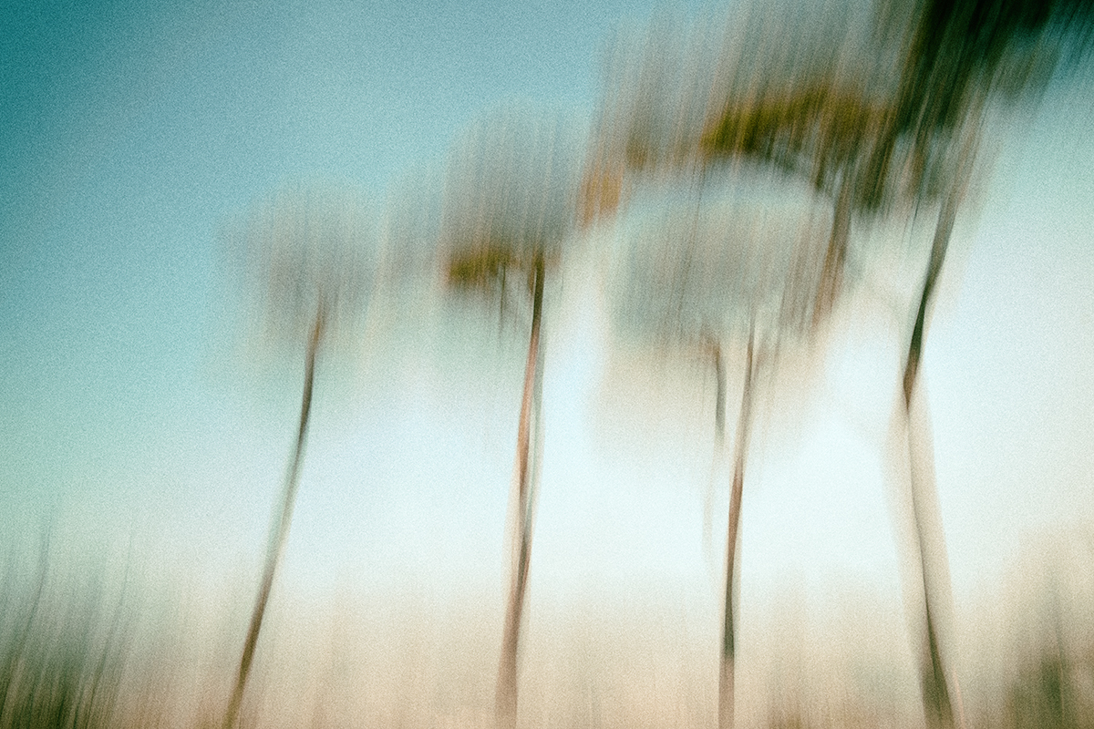 Donato Chirulli Photography - The Ballade of the Burning Trees 002