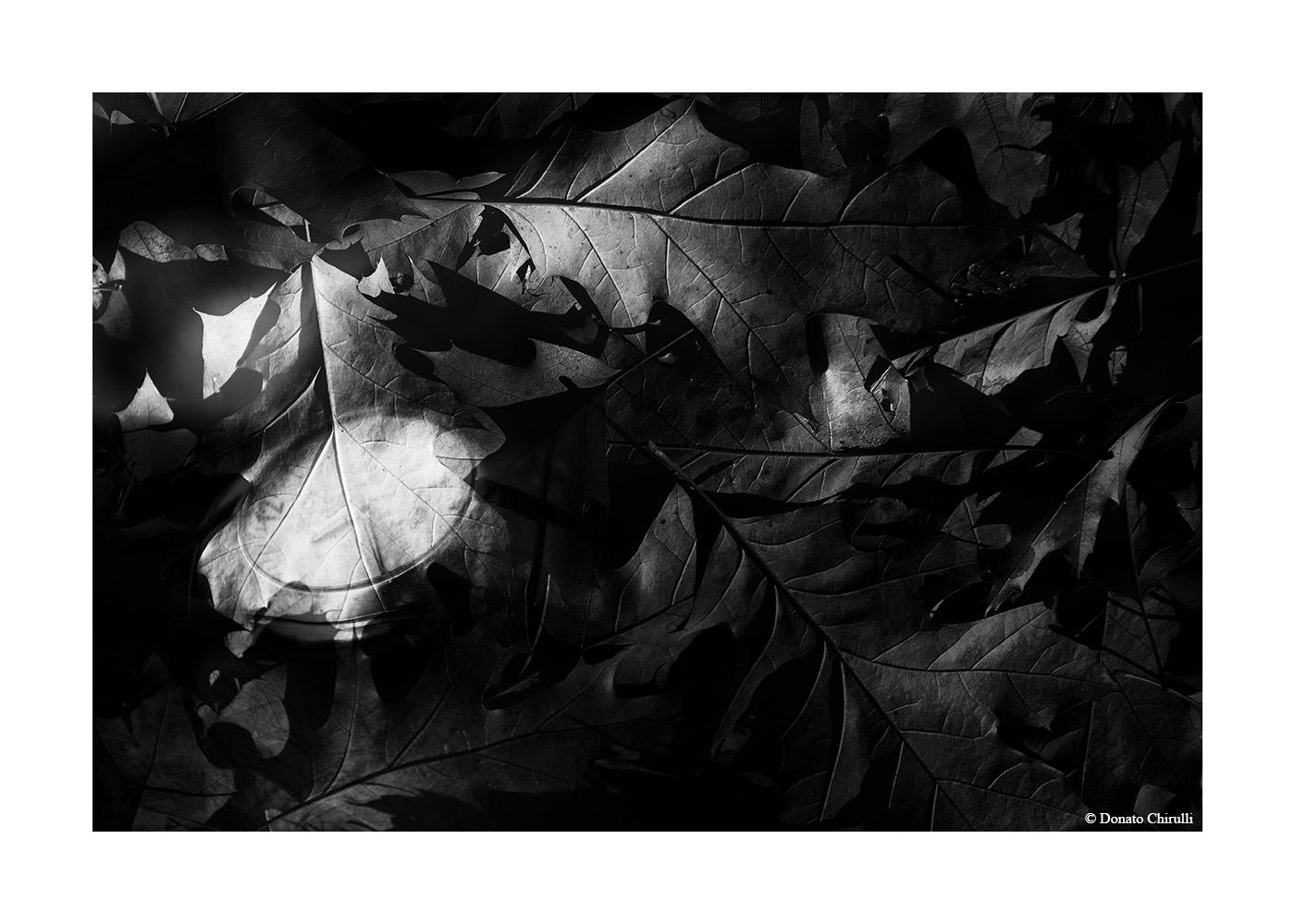 Donato Chirulli Photography -Thinghs in Time 004